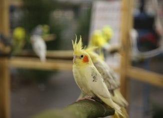 Vogelbörse in den Emslandhallen